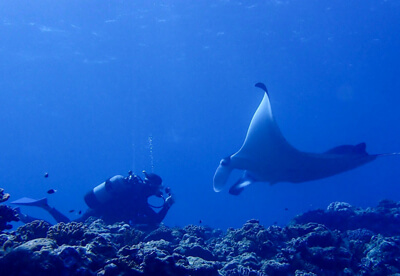 写真:マンタにチャレンジ体験ダイビング